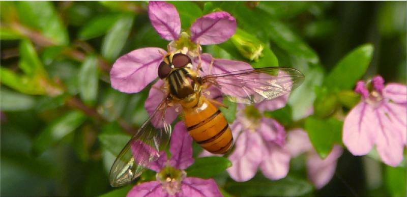 Macro on a bee