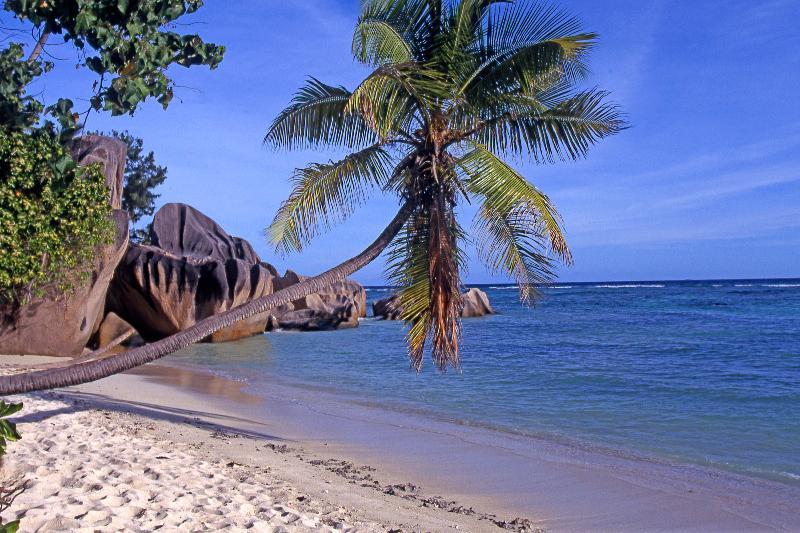 Leaning Palm-Seychelles