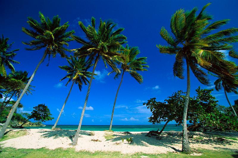 Bacardi Beach